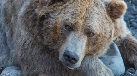 US Stocks Fall Sharply in Volatile Bear Market Trading