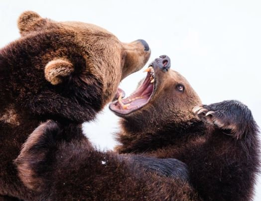 Bears Fight Back and Stocks fall 5%; Rally Trend Unbroken